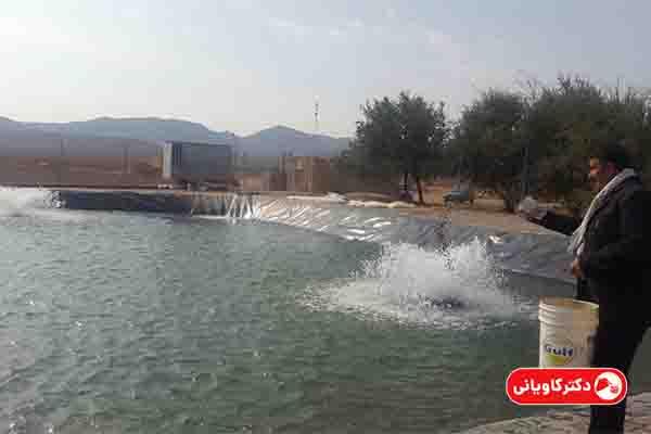 پرورش ماهی یکی از ایده های پولساز در روستا